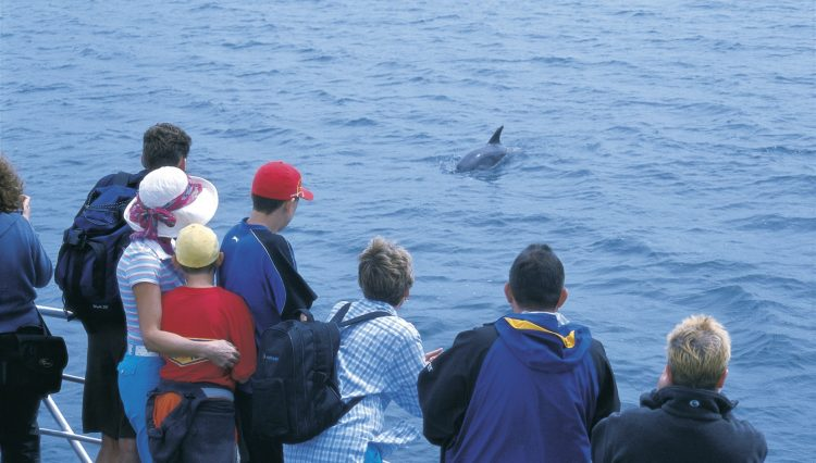 Tourists viewing dolphin, on the Discovery Centre Tour